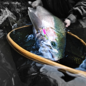 A large 16 pound buck steelhead taken on a small river (it's still the largest I've seen from this small flow). His perfect blush made for some great photogenic moments. Caught on the ever trusted 2/5 silver/pink R&B lure co. spoon.