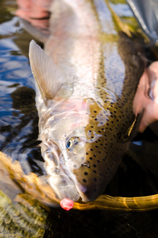 Marcs bead fish diff angle