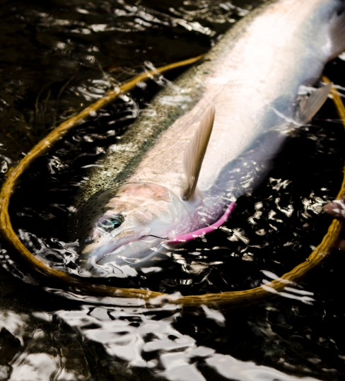 A perfect capture of a mad river pink worm in action from earlier in the day