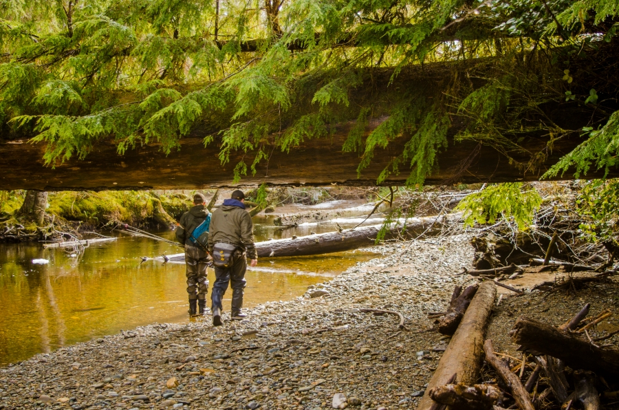walking under logs