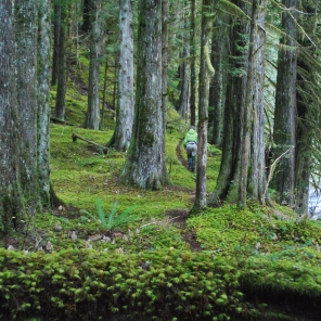 Walking a beautiful burnt in trail on a brand new system. The lush moss cover made for some beautiful scenery to capture!