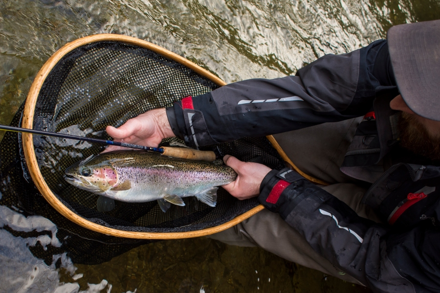 First run trout